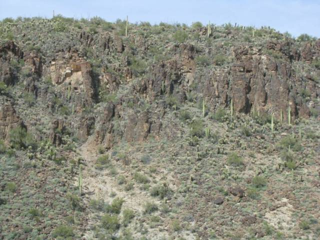 """""""More Cactus on the hills."""""""