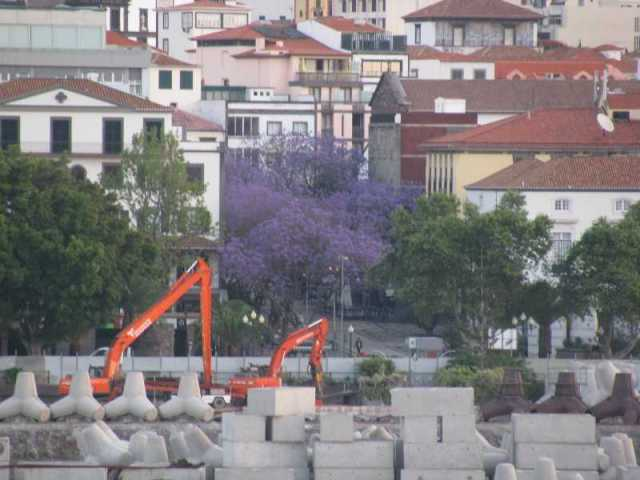 Arriving in Funchal and Lilac trees in bloom