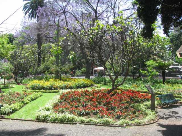 Garden in downtown Funchal