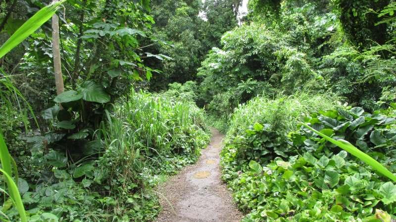 trail into Olu'olu